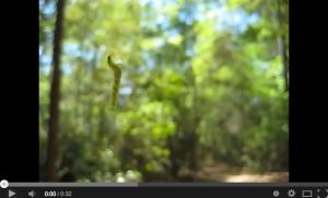 tiny-green-worm